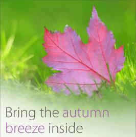 Picture of autumn leaf