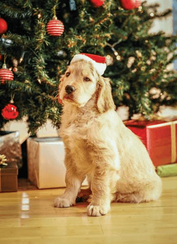 Remedies for pets over Christmas