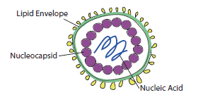 A Quick Guide to How Our Virucide Products Work Against Enveloped Viruses
